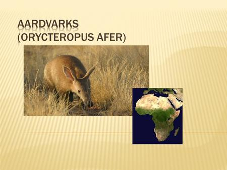  Aardvarks live in Africa, south of the Saharan Desert.  Their natural habitat is the dry savanna.
