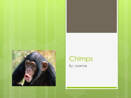 Chimps By: Joanne Description  In the wild chimps can live up to 50 years.  Chimps weigh up to 121 pounds and 55 kilograms.  Chimps are usually blackish.