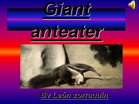Giant anteater By León zorraquin Where it lives It lives in Central America, South America east of the Andes as far south as Uruguay and North West Argentina.