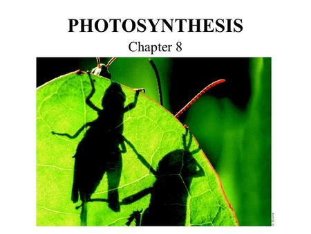 PHOTOSYNTHESIS Chapter 8. 8-1: Energy & Life Energy is supplied to some things in the form of gasoline or electricity Cells need energy too! Where do.