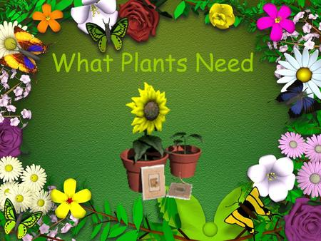 What Plants Need What do plants need to grow ? 1. Water Plants need water to help them grow. Without water a plant will dry up and die.