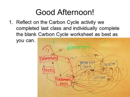 Good Afternoon! 1.Reflect on the Carbon Cycle activity we completed last class and individually complete the blank Carbon Cycle worksheet as best as you.