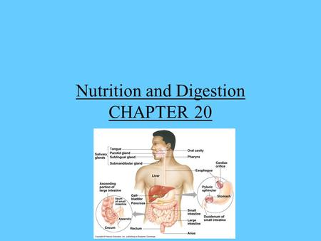Nutrition and Digestion CHAPTER 20. Everything that lives needs food, in order to carry out all of life's functions. Food contains complex organic and.