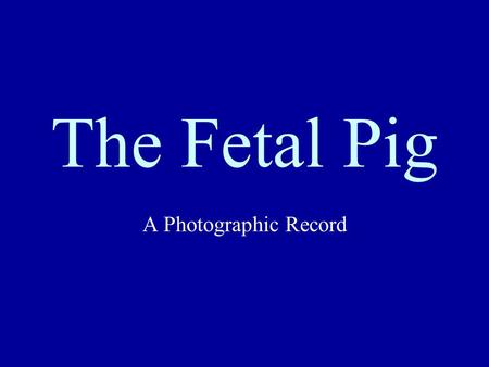 The Fetal Pig A Photographic Record. Complete Dissection.