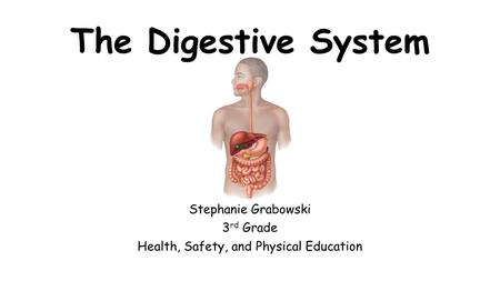 The Digestive System Stephanie Grabowski 3 rd Grade Health, Safety, and Physical Education.