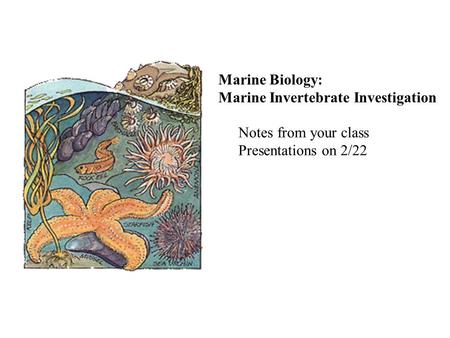Marine Biology: Marine Invertebrate Investigation Notes from your class Presentations on 2/22.