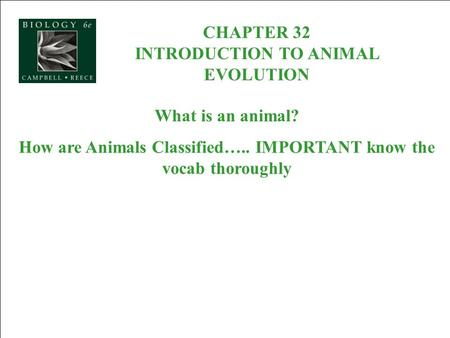 CHAPTER 32 INTRODUCTION TO ANIMAL EVOLUTION What is an animal? How are Animals Classified….. IMPORTANT know the vocab thoroughly.