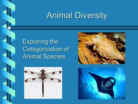 Animal Diversity Animal Diversity Exploring the Categorization of Animal Species Exploring the Categorization of Animal Species.
