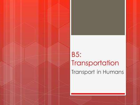 B5: Transportation Transport in Humans. Describe the circulatory system  The blood, heart and blood vessels make up the circulatory system.  The heart.