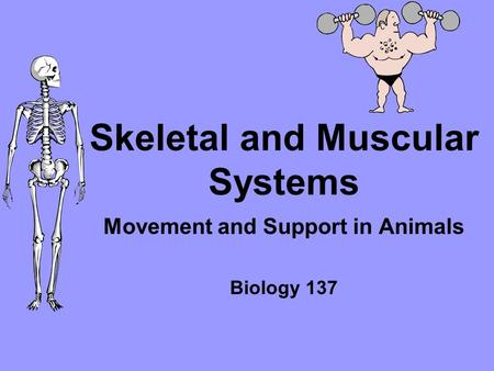 Skeletal and Muscular Systems Movement and Support in Animals Biology 137.