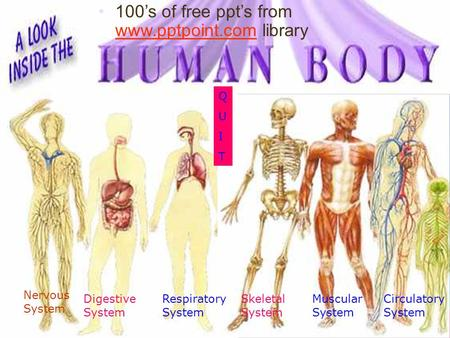Digestive System Circulatory System Skeletal System Respiratory System Nervous System Muscular System QUITQUIT 100's of free ppt's from www.pptpoint.com.