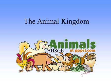 The Animal Kingdom AHSGE. Characteristics of All Animals Multicellular –(made of more than one cell!) No cell wall No chlorophyll Eukaryotic –(cells have.