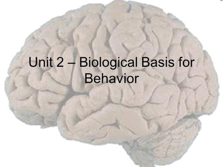 Unit 2 – Biological Basis for Behavior