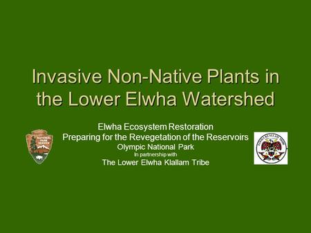 Invasive Non-Native Plants in the Lower Elwha Watershed Elwha Ecosystem Restoration Preparing for the Revegetation of the Reservoirs Olympic National Park.