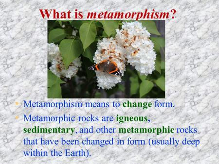 What is metamorphism? Metamorphism means to change form. Metamorphic rocks are igneous, sedimentary, and other metamorphic rocks that have been changed.
