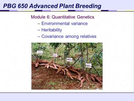 PBG 650 Advanced Plant Breeding