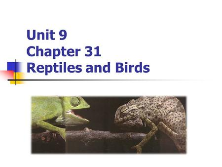 Unit 9 Chapter 31 Reptiles and Birds. What is a Reptile? Ectotherms with dry, scaly skin, with claws on their toes More advanced 3 chambered hearts.