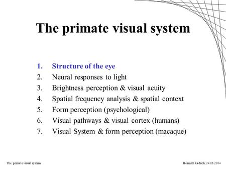 The primate visual systemHelmuth Radrich, 24.06.2004 The primate visual system 1.Structure of the eye 2.Neural responses to light 3.Brightness perception.