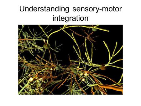 Understanding sensory-motor integration. ORGANIZATION OF SENSORY SYSTEMS: General perspectives Sensori-motor integration External senses Localize/Detect.