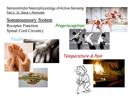 Part 2: Dr. Steve I. Perlmutter Touch Temperature & Pain Proprioception Sensorimotor Neurophysiology of Active Sensing Somatosensory System Receptor Function.