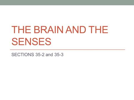 THE BRAIN AND THE SENSES SECTIONS 35-2 and 35-3. What were the divisions of the nervous system? Central Nervous System a. Brain and Spinal Cord b. Interprets.