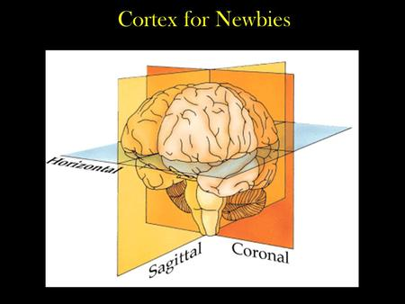Functional Areas of Cerebral Cortex 1 - ppt video online download
