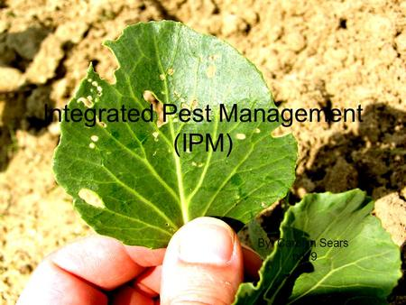 Integrated Pest Management (IPM) By: Carolyn Sears pd. 9.