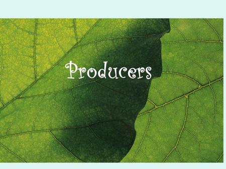 Producers. Examples of plants Why are plants producers? Because only plants can combine light energy from the sun with raw materials from the environment.