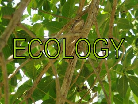 Factors within an Ecosystem Populations & Communities VOCAB Fact or Opinion MISC. 100 200 300 400 500 100 200 300 400 500 100 200 300 400 500 100 200.