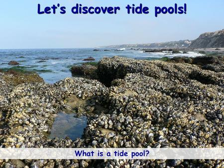 Let's discover tide pools! What is a tide pool?. What ingredients help make a tide pool? Ocean/Water Sunlight Sunlight Hint: Look at the 3 symbols in.