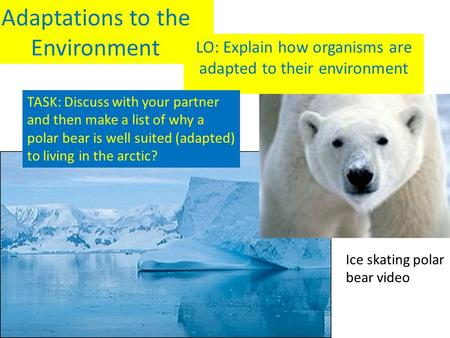 Adaptations to the Environment LO: Explain how organisms are adapted to their environment Ice skating polar bear video TASK: Discuss with your partner.