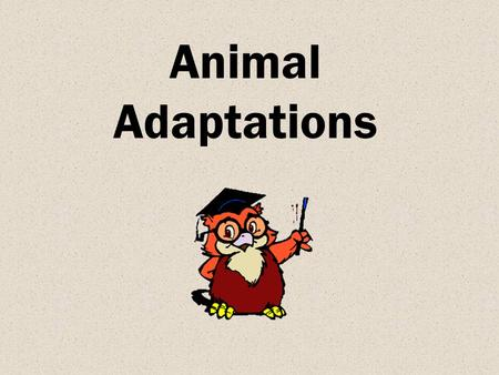 Animal Adaptations. Objectives The learner will be able to compare how organisms adapt to different environments.