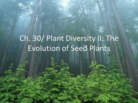 Ch. 30/ Plant Diversity II: The Evolution of Seed Plants.