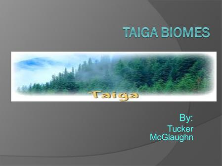 Taiga Biomes By: Tucker McGlaughn.