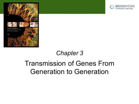 Michael R. Cummings David Reisman University of South Carolina Transmission of Genes From Generation to Generation Chapter 3.