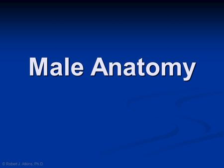 Male Anatomy © Robert J. Atkins, Ph.D..