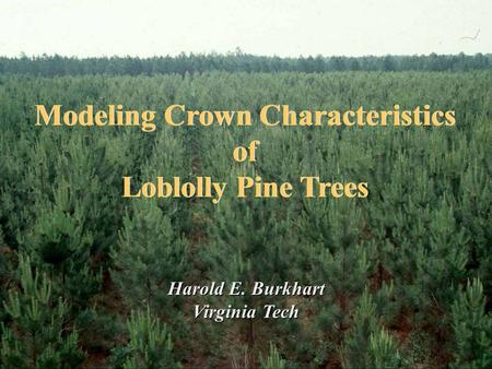 Modeling Crown Characteristics of Loblolly Pine Trees Modeling Crown Characteristics of Loblolly Pine Trees Harold E. Burkhart Virginia Tech.