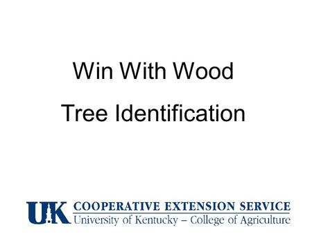 Win With Wood Tree Identification. Silver Maple Alternate – compound – lacks terminal leaflet black walnut.