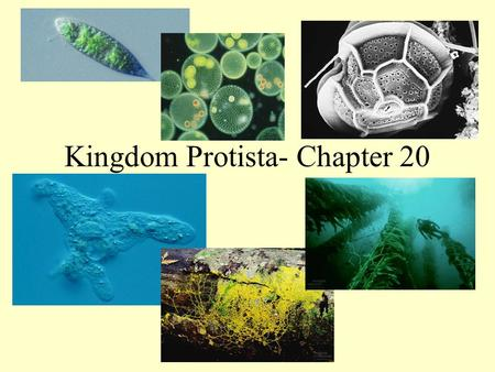 Kingdom Protista- Chapter 20. What is a Protist? Protists are eukaryotes that are not members of the Plant, Animal, or Fungi kingdoms.