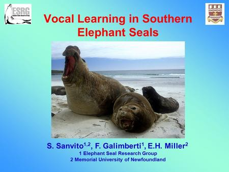 Vocal Learning in Southern Elephant Seals S. Sanvito 1,2, F. Galimberti 1, E.H. Miller 2 1 Elephant Seal Research Group 2 Memorial University of Newfoundland.