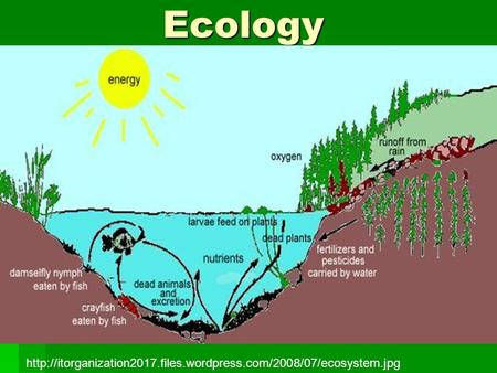 Ecology http://itorganization2017.files.wordpress.com/2008/07/ecosystem.jpg.