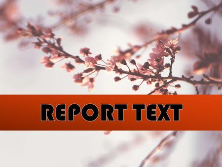 REPORT TEXT DEFINITION SOCIAL FUNCTION GENERIC STRUCTURE LANGUAGE FEATURE.