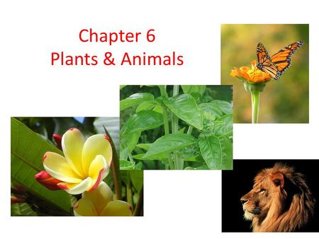 Chapter 6 Plants & Animals. Section 6.1: Comparing Plants & Animals pg. 164-168.