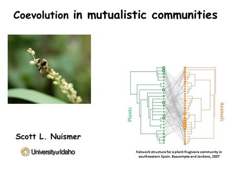 Coevolution in mutualistic communities Plants Animals Network structure for a plant-frugivore community in southeastern Spain. Bascompte and Jordano, 2007.