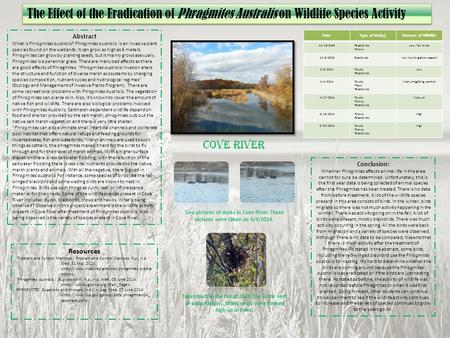 Conclusion: Whether Phragmites affects animal life in the area cannot for sure be determined. Unfortunately, this is the first year data is being collected.