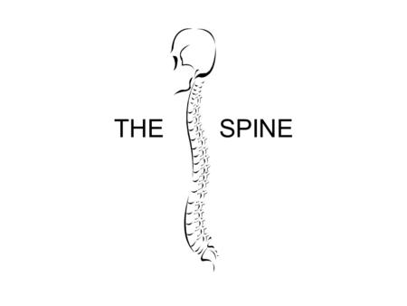 THE SPINE. STRUCTURES VERTEBRAE –7 CERVICAL Curve forward –12 THORACIC Curve backward –5 LUMBAR Curve forward –SACRUM –COCCYX Both fused Part of pelvic.