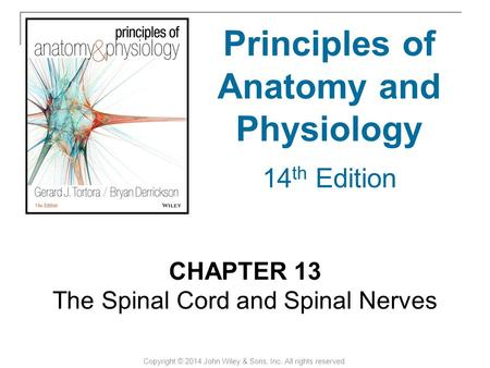 CHAPTER 13 The Spinal Cord and Spinal Nerves Copyright © 2014 John Wiley & Sons, Inc. All rights reserved. Principles of Anatomy and Physiology 14 th Edition.