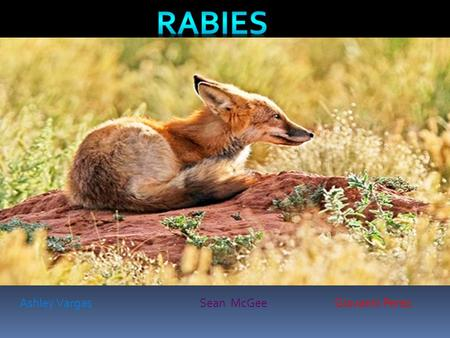 Ashley VargasSean McGeeGiovanni Perez. How do I prevent Rabies? How do I cure rabies? What are the symptoms for rabies?