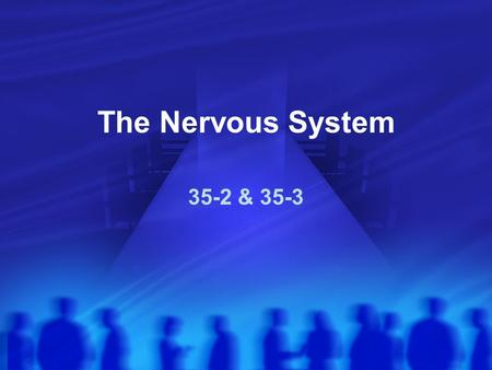 The Nervous System 35-2 & 35-3. What do YOU see here?