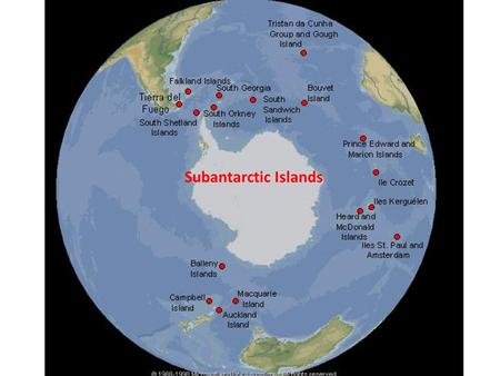 Subantarctic Islands. https://upload.wikimedia.org/wikipedia/commons/2/2e/Scotia_Sea_NOAA.jpg Scotia Arc Scotia Arc has the only island chains that link.